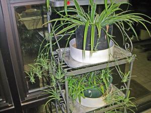 plantas interior - plantas interior
