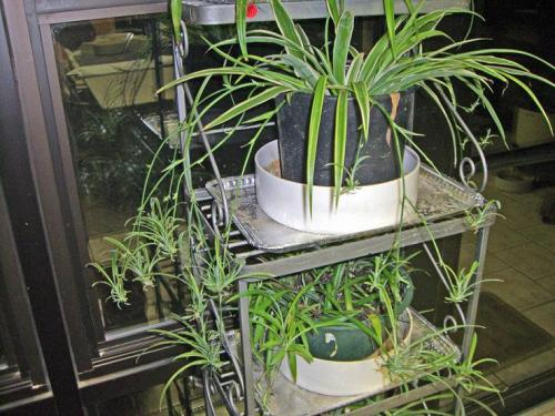 plantas interior - Mantenga las plantas en el exterior. Simplifica tu vida 13