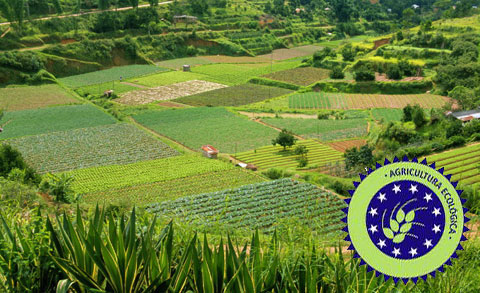 cultivos agricultura ecologica - Sobre la población agraria