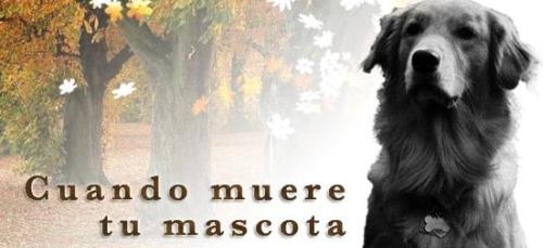 mascota - cuando muere tu mascota