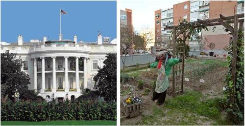 casa blancahuerta1 - Aumentan las HUERTAS FAMILIARES: desde los barrios en las ciudades a La Casa Blanca