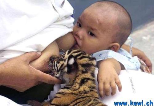 lactancia animal2 - Amor y ternura sin límites: lactancia entre especies