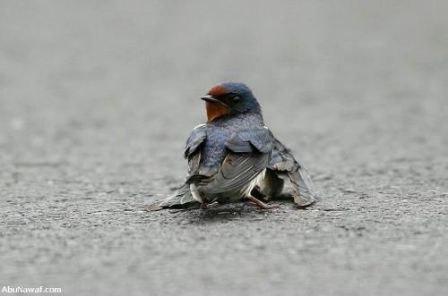 amor y compasión entre pájaros