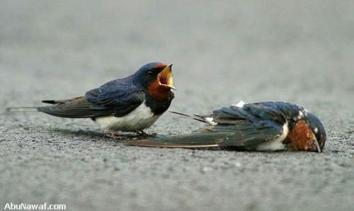 pajaro5 - amor y compasión entre pájaros