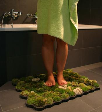 alfombra1 - Una alfombra de musgo: Naturaleza a tus pies