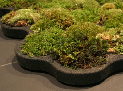 alfombra2 - Una alfombra de musgo: Naturaleza a tus pies