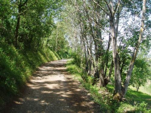 soledad camino - soledad-camino