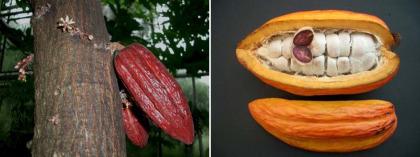 cacao - Maca inca, proteína de cáñamo y cacao maya: el batido energético