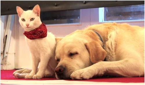 perro-gato-paz