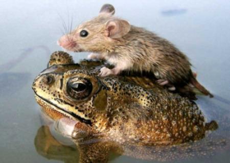 animales 04 - animales amigos