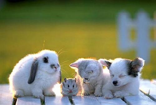 animales terapeutas - animales-terapeutas
