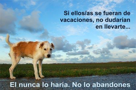 perro abandono - PLACA AZUL: iniciativa contra el abandono de animales