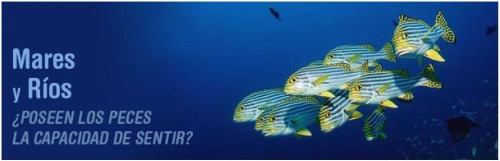 stop pesca - Los peces también existen