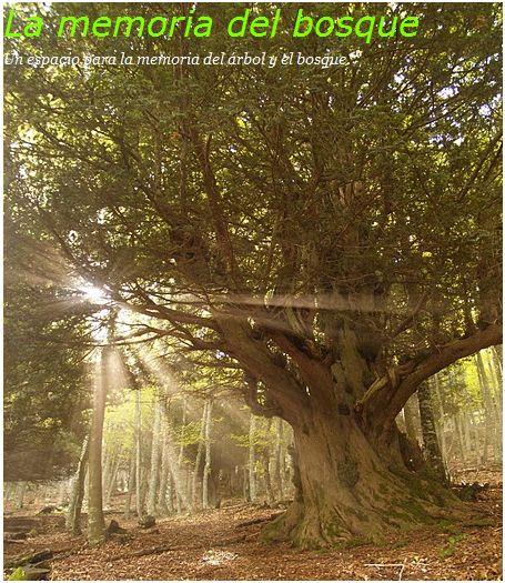 bosque - la memoria del bosque