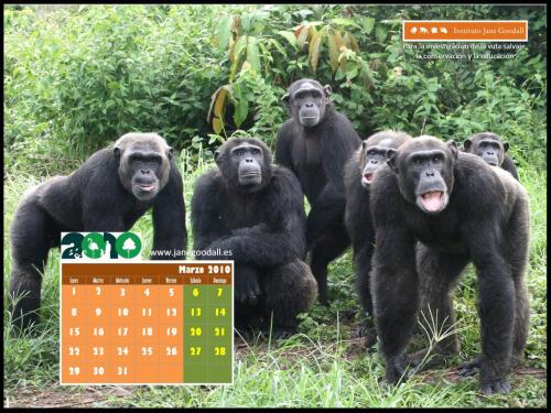 calendario ijge marzo 2010 10241pequeno - calendario-jane goodball-marzo-2010-1024