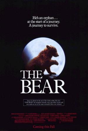 oso - El Oso: la persecución del puma