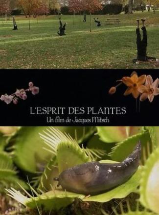 plantas - EN LA MENTE DE LAS PLANTAS: documental sobre la inteligencia del mundo vegetal