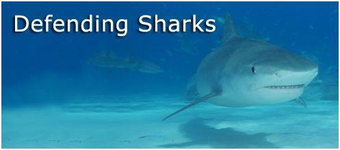 defender los tiburones