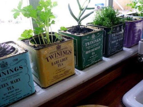 te - Cultivar plantas aromáticas en latas de té