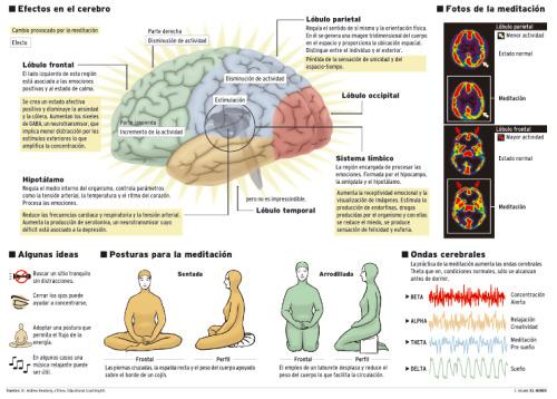 meditacion serotonina - meditacion-cerebro