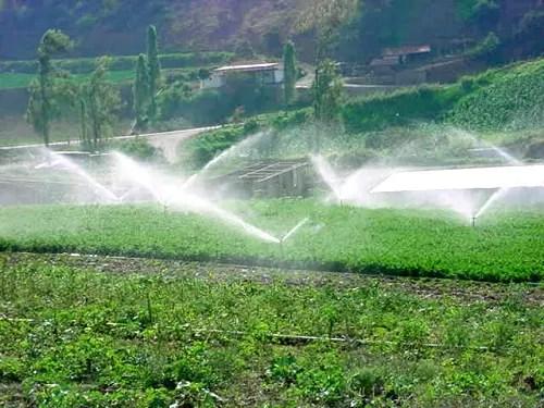 riego cultivos