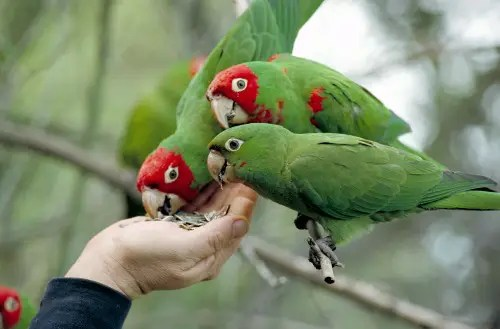 parrots_and_hand