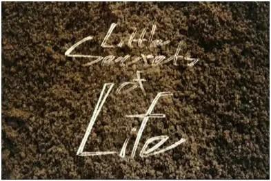 little secrets of life