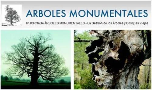 jornada arboles - IV Jornada Árboles Monumentales: la gestión de los árboles y bosques viejos