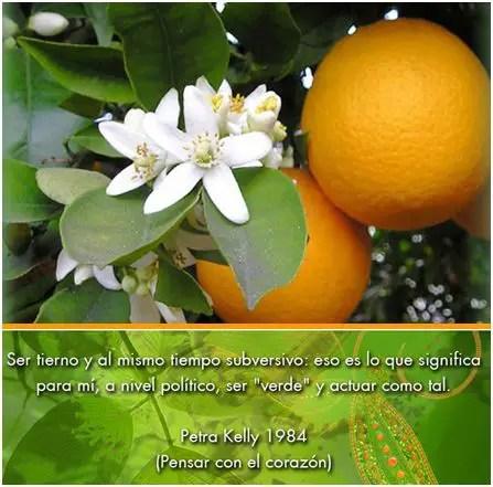naranjas - naranjas