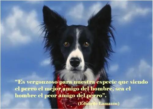 perros21 - perros