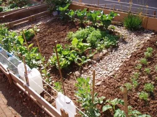 huertos3 -  Los huertos comunitarios dan vida a nuestras ciudades