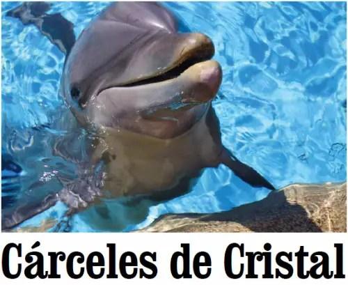 delfines CARCELES DE CRISTAL
