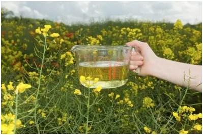 aceite1 - aceite vegetal