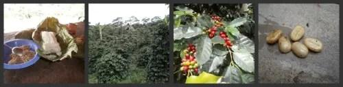 2collagecafue - Crónica de mi viaje a Perú: el Amazonas, el pulmón del planeta (4/6)