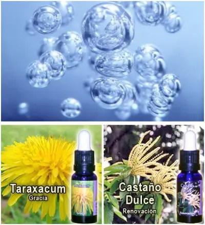 esencias triunidad - Las esencias florales Triunidad, la contaminación electromagnética y el poder transformador del agua