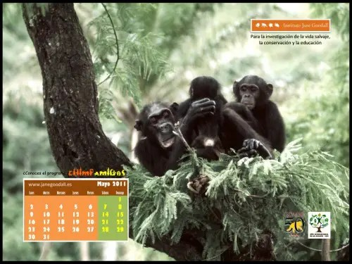 Calendario jane goodall mayo 2011
