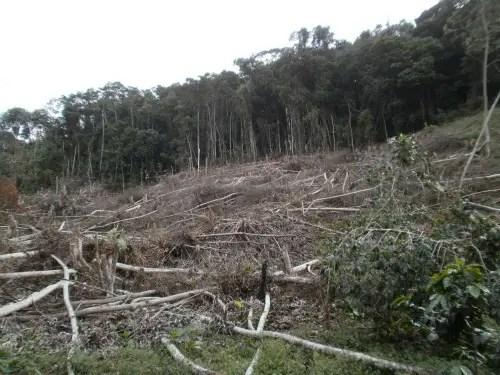 deforestacion - Unilever (Dove, Flora, Tulipan...) permite la destrucción de la Selva en Indonesia