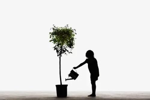 regar planta