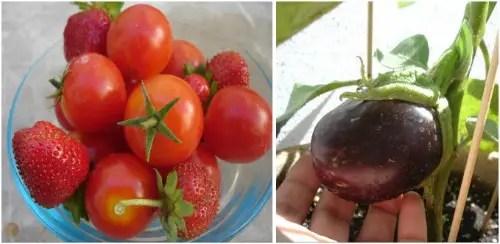 verduras - huerto urbano
