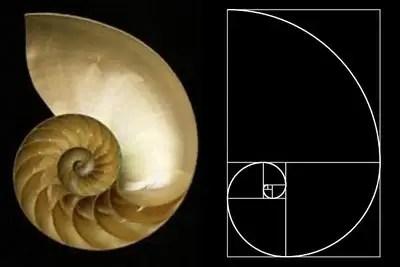 Nautilus4