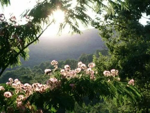 """efecto jardin juanlopez - """"Estoy segura de que todos tenemos protección invisible de una conciencia inteligente que nos acompaña continuamente"""" Entrevista a María Castejón, experta en salud natural y fundadora de un centro rural"""