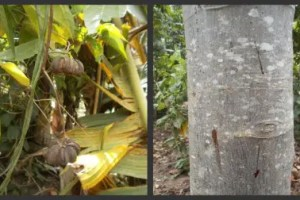 2collageptamedicinal - Crónica de mi viaje a Perú: el Amazonas, la botica del mundo (5/6)