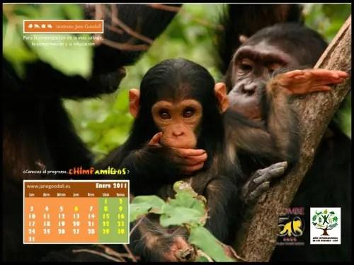 Calendario IJGE ene2011 1024 - Calendario IJGE ene2011