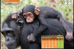 Calendario IJGE jun2011 1024b - Calendario-fondo de escritorio de Jane Goodall: junio 2011