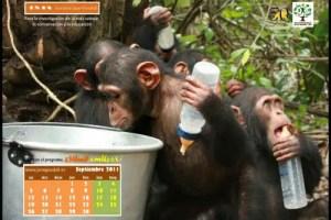 Calendario IJGE sep2011 1024 - Calendario-fondo de escritorio Jane Goodall: septiembre 2011