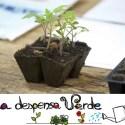 Taller online LA Despensa Verde - Taller online de iniciación al huerto urbano organizado por La Despensa Verde