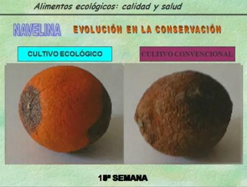 biocultura31 -