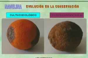 biocultura31 - Diferencias entre los alimentos ecológicos y convencionales