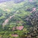 bosque de alimentos - Deja de fumar y con lo que se ahorra planta un campo ecológico en el Congo
