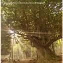 bosque1 - LA MEMORIA DEL BOSQUE: respeto y conservación de los bosques monumentales